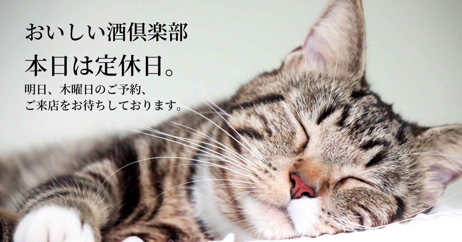 定休日_猫